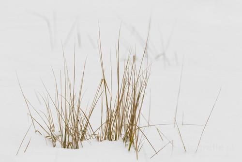 Zdjęcie wykonane obiektywem o długiej ogniskowej.