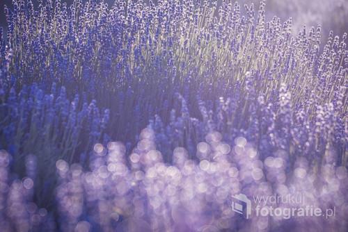 Intensywny fioletowy kolor  Intensywny zapach  Usypiający  Lawenda zachwyca  Lawenda uspokaja  Ma moc