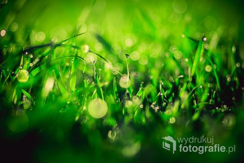 Soczyście zielona trawa z kropelkami rosy o poranku