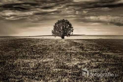 Drzewo stojące wśród pól. Fotografia współczesna przekształcona na wykonana filmem analogowym AGFA 100 Pro DX