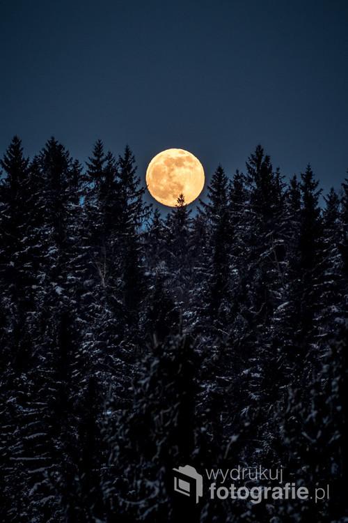 Wschodzący księżyc nad górskimi lasami