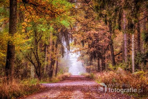 Jesienny las gdzieś na Śląsku
