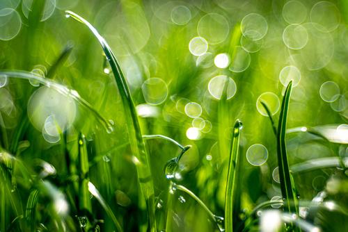 kropelki rosy z efektem bubble-bokeh na zielonej trawie