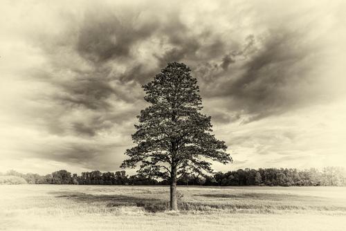 Drzewo nad potokiem w polu w wersji retro