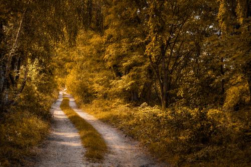 Polna droga na skraju lasu wczesną jesienią