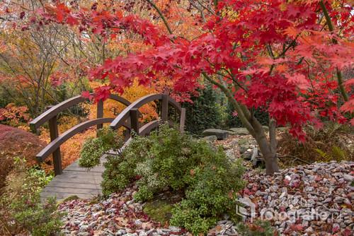 Zdjęcie zrobione w japońskim ogrodzie w ZOO w Ostrawie. Mimo padającego deszczu i słabego oświetlenia kolory były zniewalające.