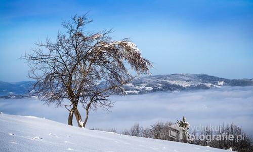 To drzewo pod szczytem Ochodzitej w Beskidzie Śląskim trwa mimo wszystkich przeciwności. Zmienia się okoliczna zabudowa, zmieniają pory roku, przychodzą inni ludzie, a ono wciąż trwa. Zasługuje na fotografię i zasługuje by to by ze ściany gabinetu przypominać o uporze potrzebnym w każdej pracy.