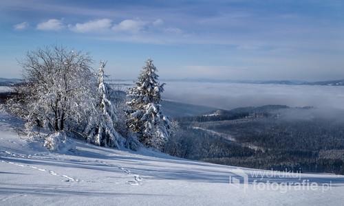 Typowy, zimowy dzień w Beskidach. Zdjęcie ze szczytu Ochodzitej  (Beskid Śląski) na lasy w okolicy wsi Jaworzynka. Lekki mróz. Wcześnie rano.