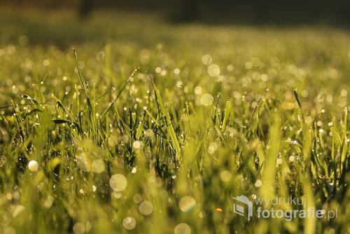 na miękkiej trawie przed domem