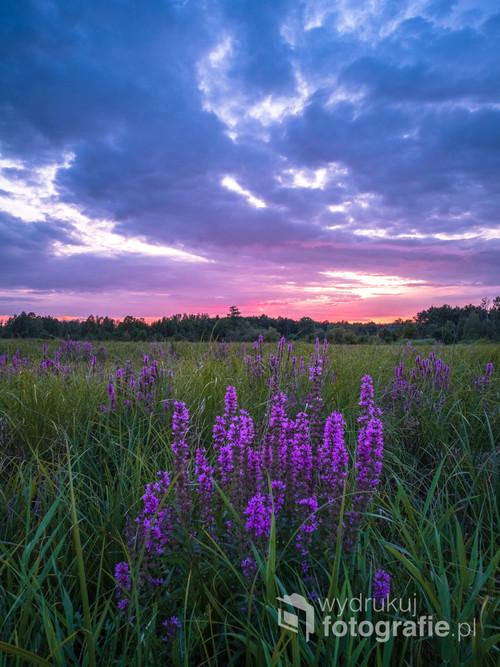 Fioletowy zachód słońca.