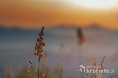 Górska trawa na tle zachodzącego słońca