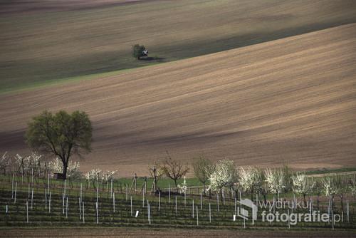 Zdjęcie przedstawia Morawską winnicę na pierwszym planie oraz pole uprawne w tle a wszystko to na pofalowaniej powierzchni dające iście nieziemski krajobraz.