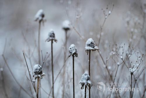 Ogród żyje nawet w zimie, a padający śnieg tworzy obraz warty uwiecznienia.