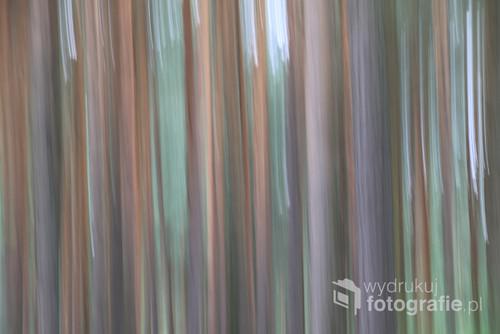 Obraz utrwalony podczas 12 kilometrowego spaceru wśród lasów, gdzie drzewa zachwycają swoją dostojnością i dają ukojenie. Fotografia oddaje ten nastrój.