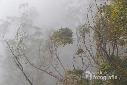 Drzewa laurowe podczas ulewnego deszczu i wiatru wydają niezwykle intensywny zapach, którego nie udało mi się utrwalić. Pozostał widok powyginanych we mgle przez żywioł konarów.