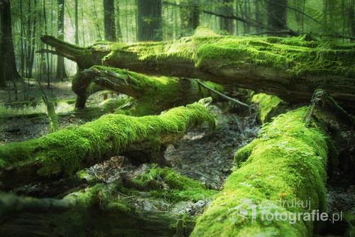 Martwe drewno to nie tylko wdzięczny obiekt fotografii, ale także istotny element naturalnych ekosystemów leśnych :)