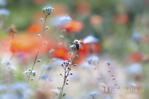 Sen o pszczelim ogrodzie