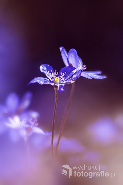 Opowieść o miłości kwiatów
