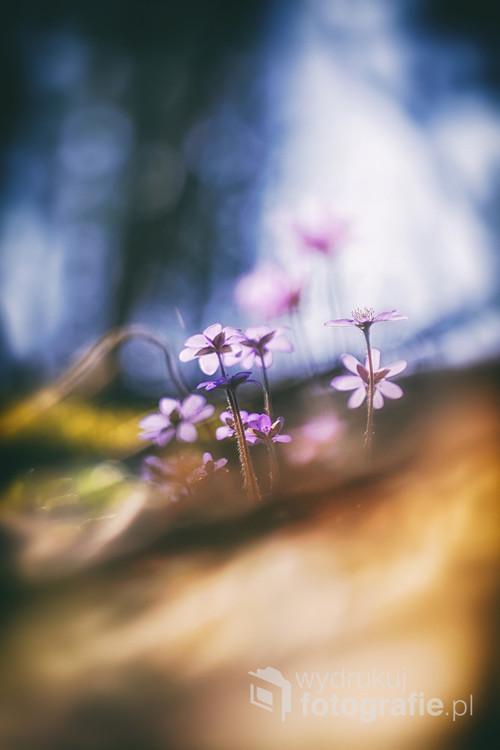 Wiosenne kwiaty oplatają las swoją magią.