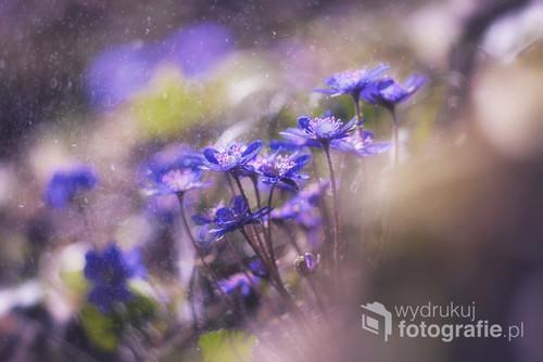 Wiosna w lesie - czas odrodzonej nadziei i nowych początków