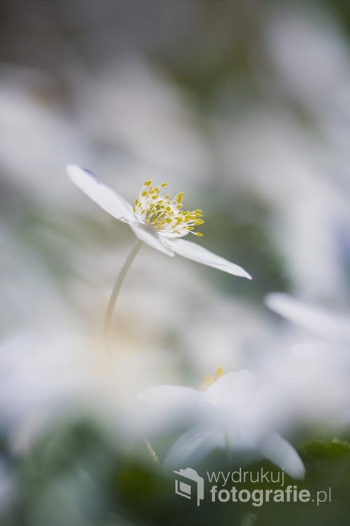 Efemeryczne piękno, któremu dane jest trwać tylko na fotografii