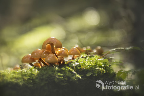 i świetlistym lesie pełnym tajemnic
