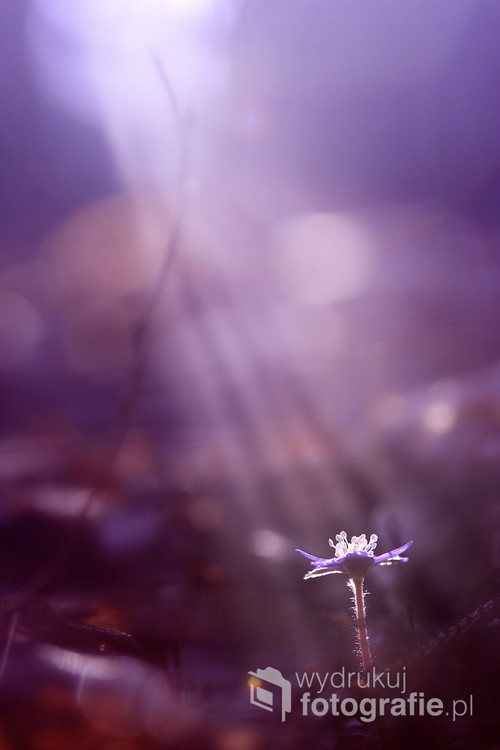 Kwiat oświecony :)