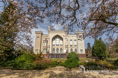 Zamek w Kórniku położony w otoczeniu bajecznego arboretum pełnego zakwitających magnolii.