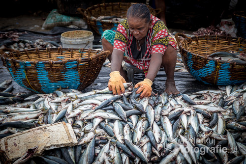 Zdjęcie powstało na Sri Lance. Targ rybny to idealne miejsce do niepowtarzalnych kadrów. Ta starsza kobieta mnie zauroczyła, dłuższą chwilę przyglądałam się jak z wielkim zaangażowaniem segreguje ryby. Z wielu zdjęć wybrałam to bo najbardziej odzwierciedla jej pracę.