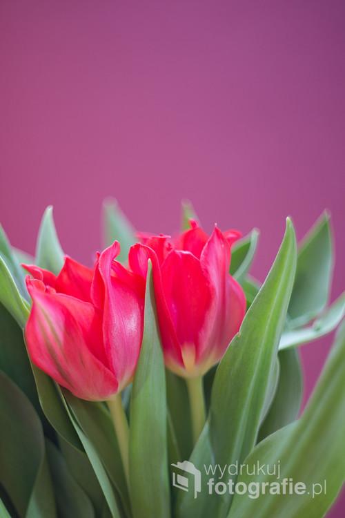 Lubię dostawać kwiaty i staram się wszystkie uwieczniać.