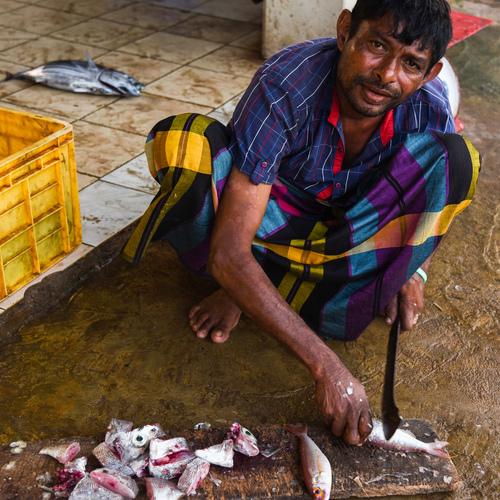 Targ rybny na obrzeżach miejscowości Weligama na Sri Lance.