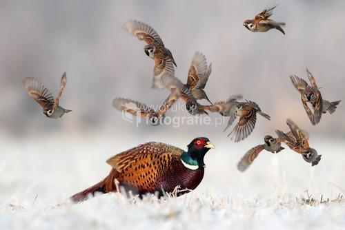 Zdjęcie wykonałem zimą 2013 roku w Dolinie Górnej Odry. Zdjęcie zostało wyróżnione w 11. Wielkim Konkursie National Geographic Polska