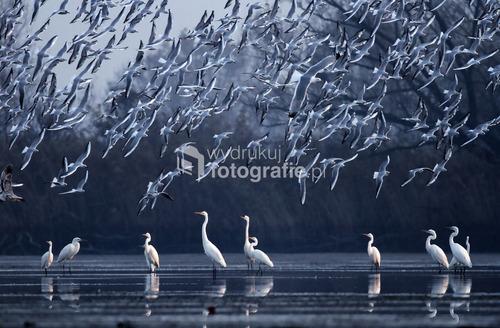 Zdjęcie wykonałem w listopadowy poranek, w 2013 roku, w Dolinie Górnej Odry. Zdjęcie zostało wyróżnione w 10. Wielkim Konkursie National Geographic Polska