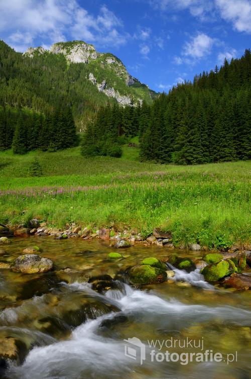 Fotografia wykonana w Tatrach, w Dolinie Kościeliskiej.