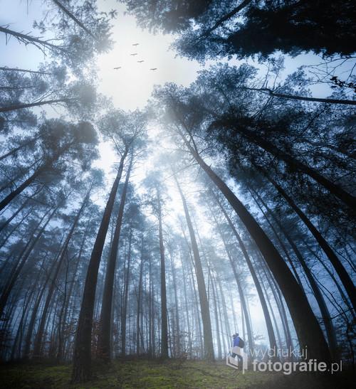 Panoramiczne ujęcie lasu, wiosenny powrót ptaków, podróżnik obserwator.
