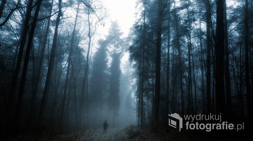 Późnojesienny lub wczesnowiosenny pejzaż, wędrówka przez mglisty las.