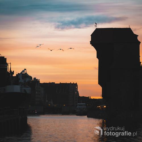 Stado Mew lecących nad Motławą podczas zachodu słońca