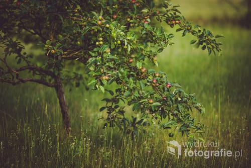 Wspomnienie dzieciństwa i zapach jabłek w Twoim pomieszczeniu.