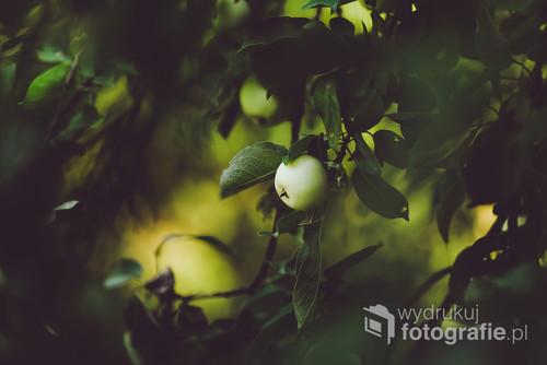 Jabłoń w ciepłej tonacji.