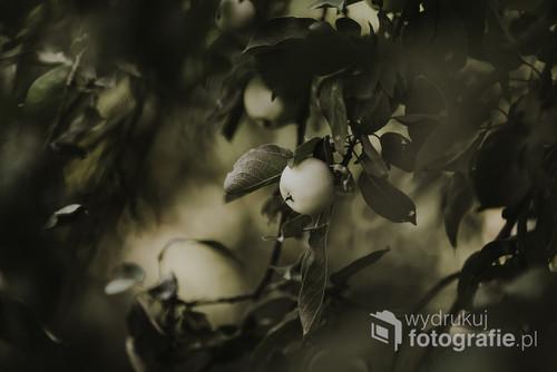 Jabłoń w odcieniach ciemniejszej, stłumionej zieleni.