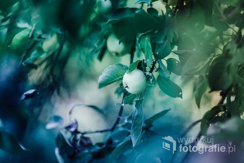 Jabłoń w chłodnych odcieniach zieleni i niebieskiego.