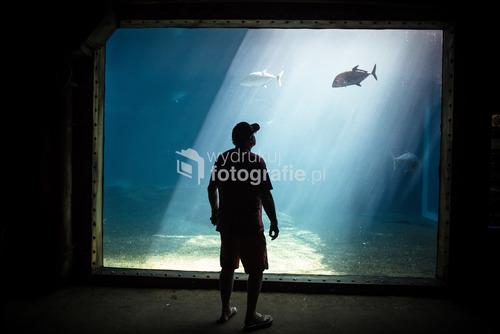Druban, RPA, uShaka Marine World, ryba ogląda człowiek, który przyszedł do oceanarium.  Nagrody:  Leica Street Photo 2016