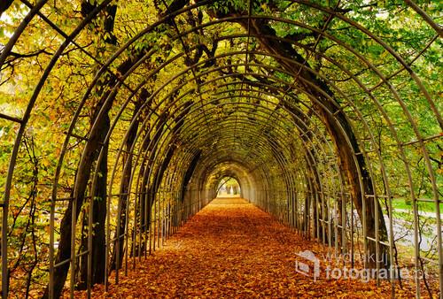 Piękny grabowy bindaż  , w jesiennej odsłonie. Ten wspaniały element architektury parkowej ,to niewątpliwie wielka atrakcja Kołobrzegu.