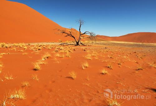 Krajobraz pustyni Namib, Namibia 2013