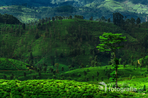 Widok na zielone wzgórza prowincji Ella, Sri Lanka 2015
