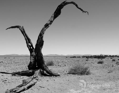 Park Narodowy Namib, Namibia 2013