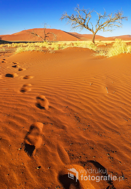 Park Narodowy pustyni Namib, Namibia 2013