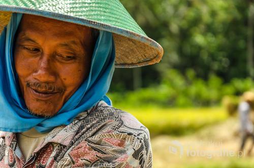 Zbiory ryżu - południowa Jawa, Indonezja 2016