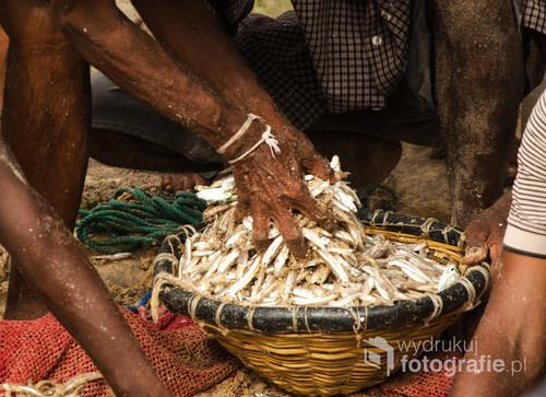 Rybacy rozdzielają ryby po udanym połowie na plaży Hikkaduwa. Sri Lanka 2015.
