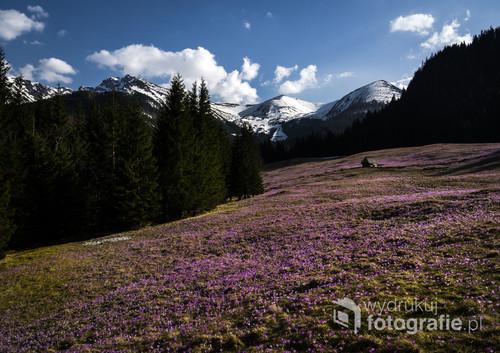 Dolina Kalatówki - kwiecień 2018